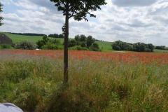 Fahrt um die Mohnfelder in Mühl Rosin
